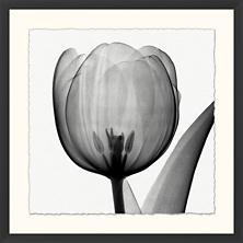 Greyscale Tulip Art