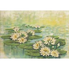 Lilypads Art