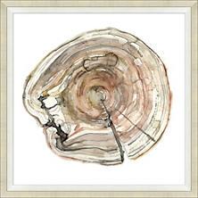 Wood Grain Rings 3 Art