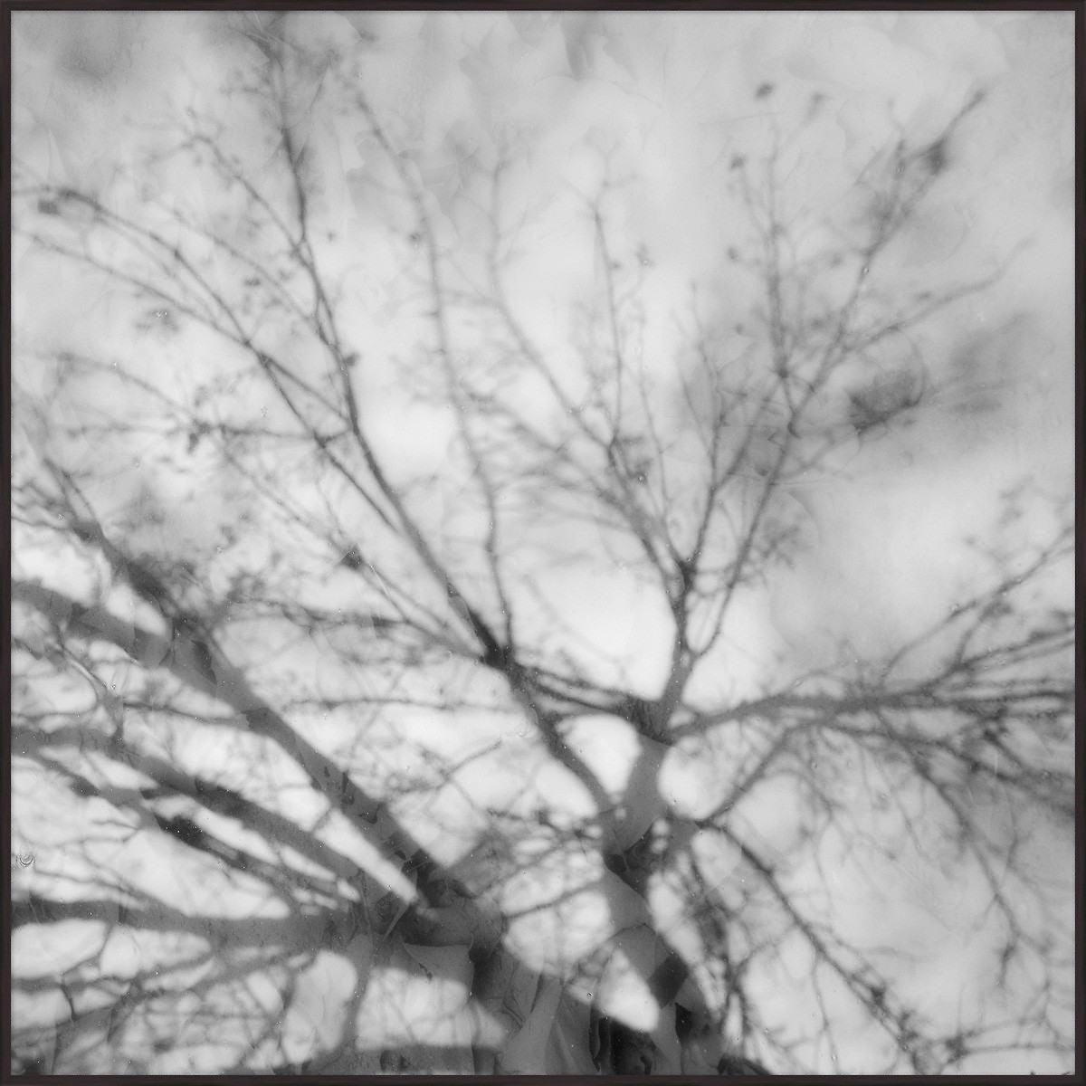 Branches Art