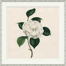 Camellias 1 Wall Art