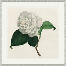 Camellias 2 Wall Art