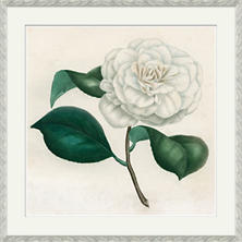 Camellias 3 Wall Art