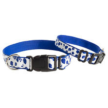 Dalmatian White/Blue Collar