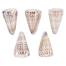 Lettered Cone/Set Of 5