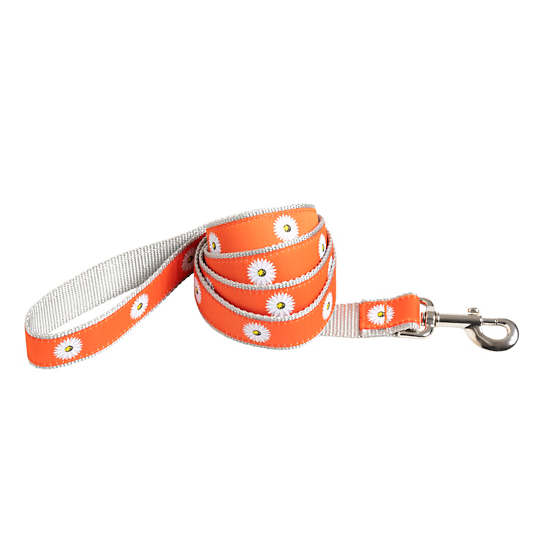 Orange Daisy Leash