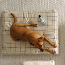 Dog Perignonn  Dog Toy