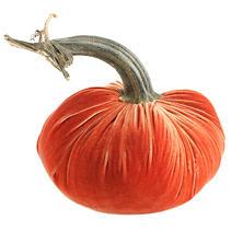Velvet Salmon Pumpkin