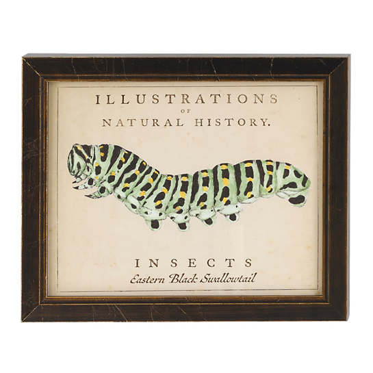 Vintage Caterpillar Wall Art