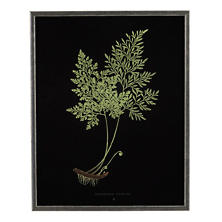 Vintage Fern 1 Wall Art