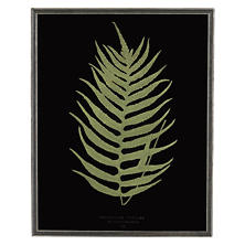 Vintage Fern 2 Wall Art