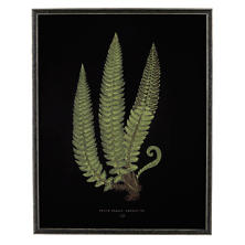 Vintage Fern 3 Wall Art