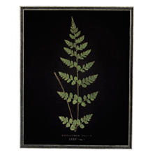 Vintage Fern 4 Wall Art