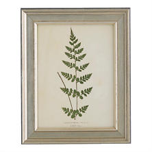 Vintage Fern 5 Wall Art