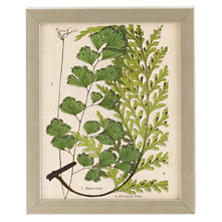 Vintage Fern Collage 1 Wall Art