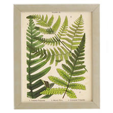 Vintage Fern Collage 2 Wall Art