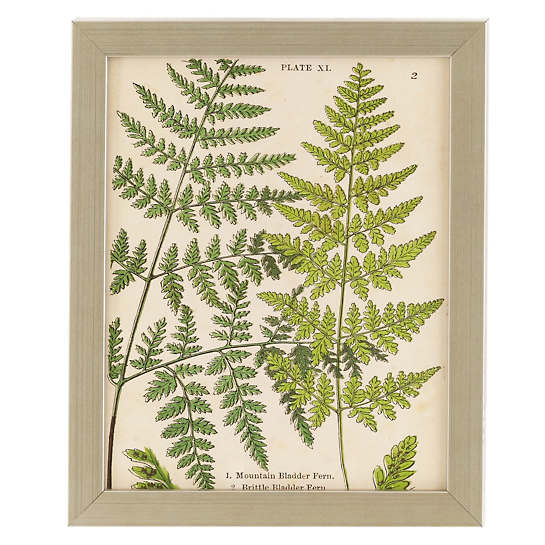 Vintage Fern Collage 3 Wall Art