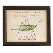 Vintage Grasshopper Wall Art