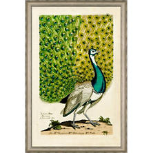 Peacock East Wall Art